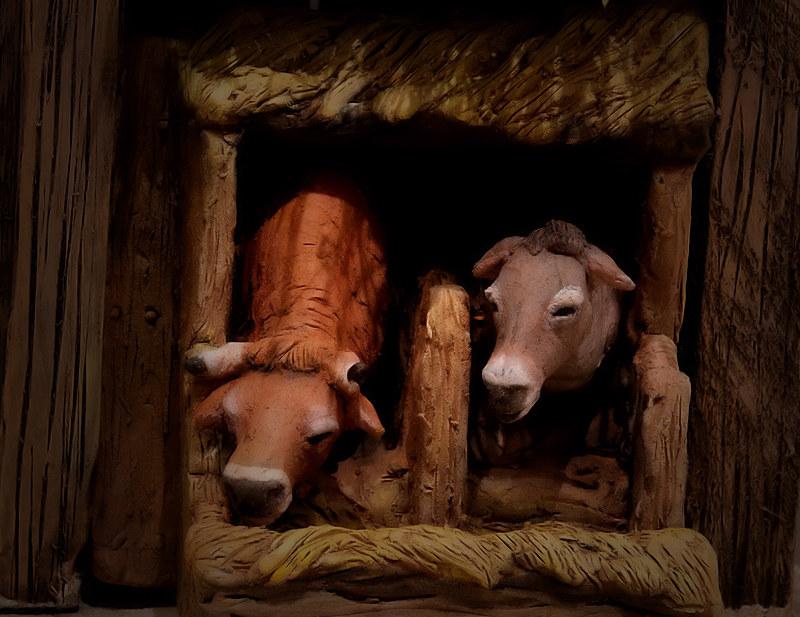 Natività al riparo di una stalla: bue e asinello alla mangiatoia